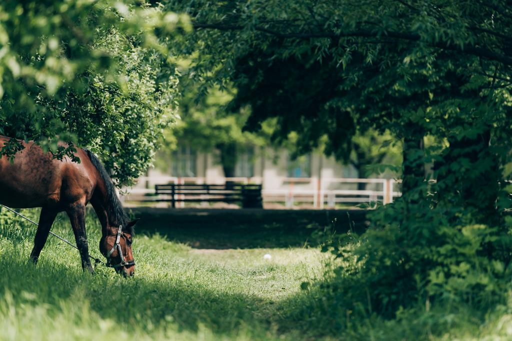 Horseware Irleand kuje sukces z Infor M3